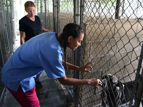 A female student plays with a dog in a cage while touring a veterinary clinic.